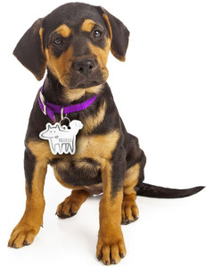 dogs-first-lisaravinteet